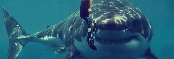 Есть ли в Черном море опасные хищники? На глубине и возле берега, кого можно встретить Какая опасность для человека и что нужно знать о хищниках Черного моря. Акула Катран, морской дракончик, скат-хвостокол, скорпена, медузы корнерот и аурелия, последствия встречи с черноморскими хищниками. https://i.iheart.com/v3/re/new_assets/5b74827a3a3f502edbcb8a46